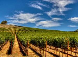 Wijngaard op Gran Canaria