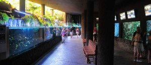 Palmitos-Park---Maspalomas---Gran-Canaria---Aquarium