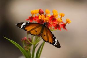 Vlinders in Palmitos park op Gran Canaria