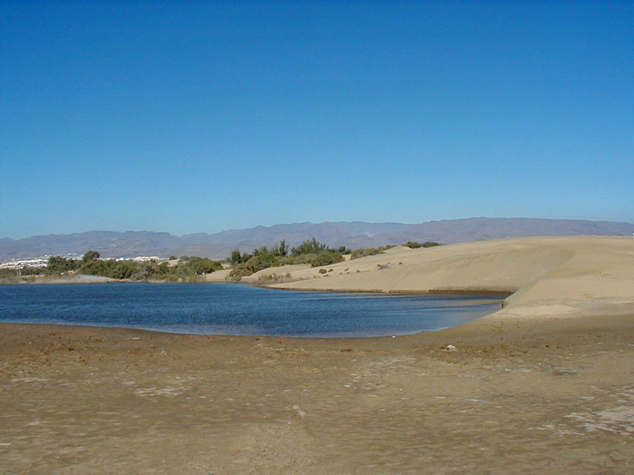 La Charca is a nature reserve and breeding ground of birds in Maspalomas