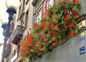 Huisgevels met bloemen in Calle Triana in Las Palmas