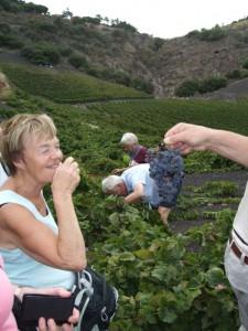 Wijnroute op Gran Canaria